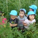 宮崎さんちの畑